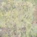 green garden thicket. 72x 60 thumbnail